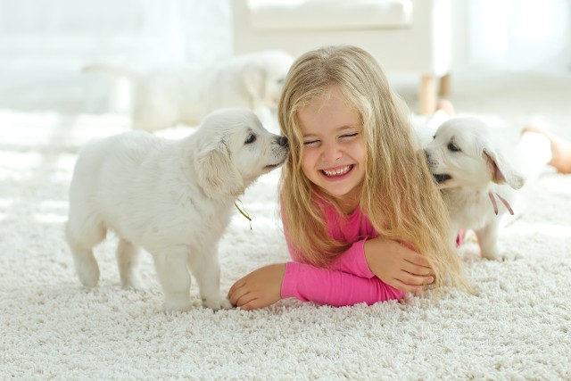 Child Playing with Puppies - Contact Us in Spanish Fort AL